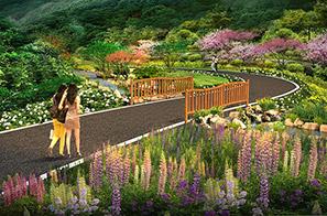 张家界悬崖花开养生谷景观设计